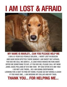 "MISSING ~~~~~ MICHIGAN ~~~~~ #Lost! ""Marley"" 5 years old #GoldenRetriever #dog.  Last seen on December 30th 2012. No color, no tags, sweet but afraid. Please call Janel Sass-Polland 914-489-1849 or Steve 914-489-1852  Thank you."