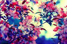 Samuel David Lehrer-Flower Garden