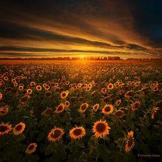 Sun field  #sunflower #nature #field #landscape #sunset #amazing #photooftheday #picoftheday #instagood #followme #follow #подсолнухи #поле #закат #ukrainegrams #ukrainian_insta #ukraine #ukraine_blog #Украина #photoukraine @photoukraine @Ukraine_blog #sun #солнце #psfoto