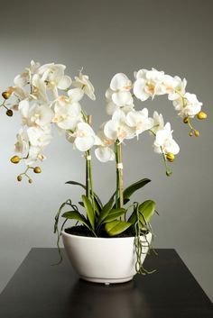Las flores mas bonitas del mundo!!!! :)