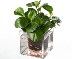 Double-deck Self-Watering Desk Potted Plant