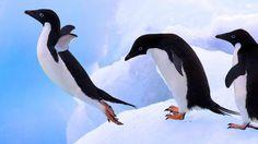 About Linux Admin – EZ Linux Admin