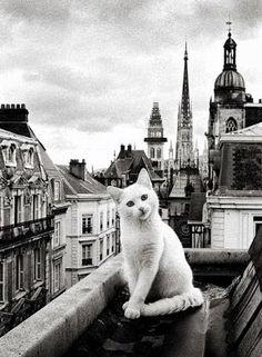 - Paris entre Chats