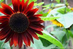 Wonderful Life Farm: The Garden Tour - Stop #1