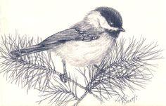 Un croquis de crayon d'une Carolina Chickadee (de Kelly Riccetti)