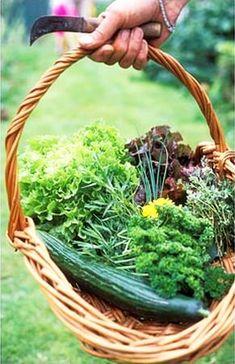 Herbs, Health, Garden, Outdoor, Food, Vitamin E, Outdoors, Garten, Health Care