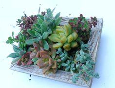 Succulent Wall Art 8 X 6 Vertical Planter Garden Frame Gift Living