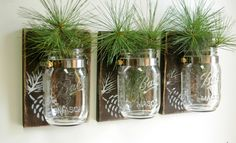 Pinecone Wall Decor Trio Three Mason jars mounted on recycled wood shabby chic rustic wall decor by PineknobsAndCrickets on Etsy https://www.etsy.com/listing/162544327/pinecone-wall-decor-trio-three-mason