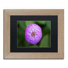 "Trademark Global 'Purple Flower' by Jason Shaffer Framed Photographic Print Size: 11"" H x 14"" W x 0.5"" D, Matte Color: Black"