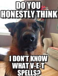 Some Helpful Ideas For Training Your Dog. Loving your dog does not mean you are willing to let him go hog wild on your possessions. That said, your dog doesn't feel the same way. Humor Animal, Funny Animal Jokes, Cute Funny Animals, Hilarious Memes, Animal Memes, Hilarious Sayings, Animal Quotes, 9gag Funny, Videos Funny