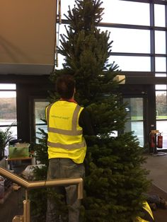 Installing and decorating real christmas trees in offices