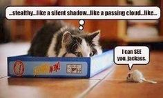 Why do stupid cat pics/videos ALWAYS crack me up? I'm convinced I'm a crazy cat lady at heart. Funny Animal Pictures, Funny Animals, Cute Animals, Crazy Cat Lady, Crazy Cats, Gato Gif, Sneak Attack, Cat Mouse, Pumas