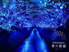 """中目黒のイルミネーションは""""青の洞窟""""、目黒川水面が青く染まる"""