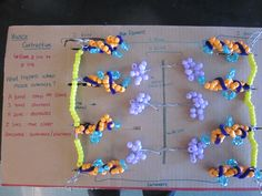 Sliding filament theory, manipulative model