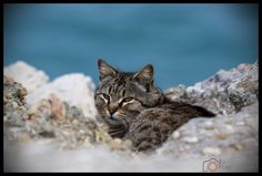 The cat ©Nono Pirvu Cats, Animals, Gatos, Animais, Animales, Animaux, Animal, Kitty, Serval Cats