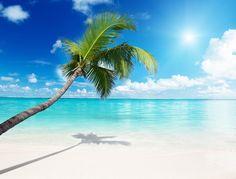 фотообои на стену купить. Моря пляжи море пляж пальмы берег