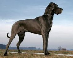 World's Tallest Dog and Cat Revealed