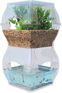 The Garden Fish Tank: Future Sustainability And Indoor Gardening