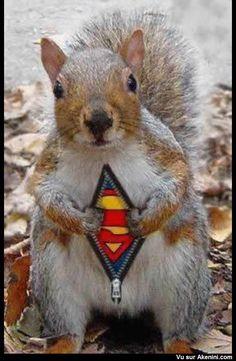 Écureuil Superman - Squirrel Superman Writing prompt raconte une journée de Superécureuil