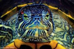 Close Ups of Small Animals and Insects (73 photos) - Xaxor