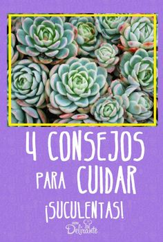 Cactus Y Suculentas, Succulents, House Design, Plants, Costa, Gardens, Propagate Succulents, Hanging Succulents, Growing Plants