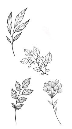 Tattoo Sketches, Tattoo Drawings, Art Sketches, Floral Illustrations, Botanical Illustration, Flower Tattoo Designs, Flower Tattoos, Tattoos Faciles, Floral Drawing