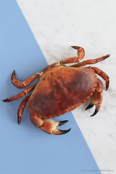 Crab // Krabba