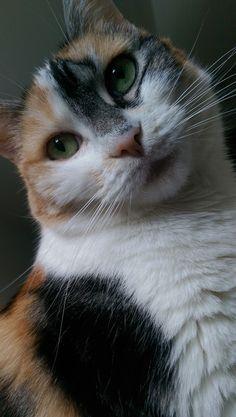 Beautiful Sophie-cat.