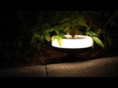 Couponing Momma Giveaways & Reviews: Giveaway | GearBest Intelligent Solar Garden Light Giveaway US Ends 9/13
