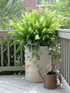 Ferns and Vines in a Redwing Crock