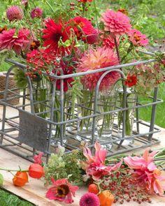 Flower Farm, My Flower, Cut Flowers, Wild Flowers, Flower Bomb, Gerbera, Flower Fashion, Garden Inspiration, Flower Arrangements
