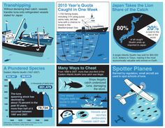 How Bluefin Tuna are overfished in illegal and unregulated ways. Lobster Fishing, Tuna Fishing, Fishing Lures, Fishing Boats, Fly Fishing, Spear Fishing, Grouper Fish, Marlin Fishing, Survival Fishing