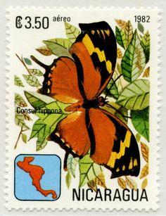Mariposas de Nicaragua Consul hippona 03/1982 Nicaragua