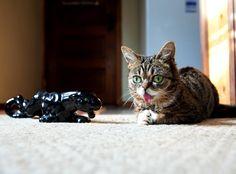 Bub impersonates a jaguar statue.