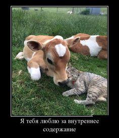Васи.нет > Демотиваторы 02.03.2016 (30 фото)