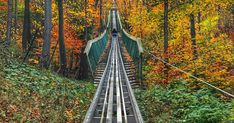 You Can Ride This Mountain Coaster Through The Forest In Ontario This Fall - Narcity Places To Travel, Places To See, Travel Destinations, Travel Stuff, Weekend Trips, Day Trips, Best Roller Coasters, Ontario Travel, Unique Vacations