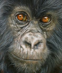 Mountain Gorilla New David Stribbling Oil Painting