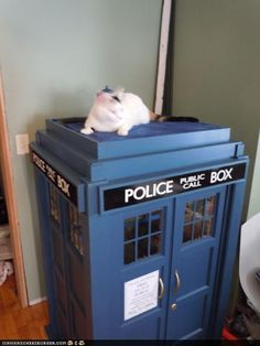Kaylees TARDIS Cat Fort - Home Click through for a full walk through. Beautifully done