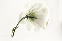 Flower Power by Pat Cooper / 500px Very Beautiful Images, Absolutely Gorgeous, Happy Easter, White Flowers, Flower Power, Photography, Happy Easter Day, Photograph, Fotografie