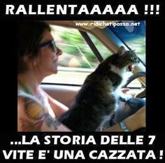 YOU DRIVE LIKE MY GRANDMA - LOLcats is the best place to find and submit funny cat memes and other silly cat materials to share with the world. We find the funny cats that make you LOL so that you don't have to. Memes Humor, Funny Cat Memes, Haha Funny, Funny Cats, Funny Animals, Cute Animals, Cats Humor, Humor Humour, Funny Horses