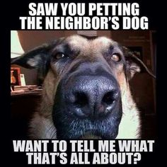 This is definitly the way my dog acts!