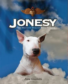 Jonesy, The Mexican English Bull Terrier tells his story in the first person. He moves fron the city to the beach where he eats crabs and swims in big waves All Dogs, Best Dogs, Dog Suit, Blurb Book, English Bull Terriers, Book Photography, Book Publishing, Little Boys, Bullying