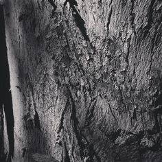 Eucalyptus Abstract #tree #nature #outdoors #garden #bark #bw #blackandwhite #blackandwhitephotography