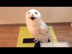 VIDEO: This cute owl looks happy to see this guy.