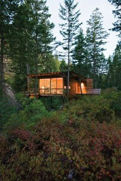 Cozy cottage on stilts in the forest