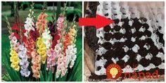 Moja svokrička miluje gladiole a pestuje ich už hádam aj 30 rokov. Každú sezónu ich má prenádherné, stoja pri plote ako vojaci v jednej rade a sú také obsypané kvetmi, že sa za nimi musí Exterior, Gardening, Table Decorations, Holiday Decor, Home Decor, Gardens, Growing Up, Roses, Gladioli