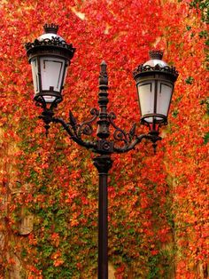 otoño - - otoño / autumn / outono / L'automne / Herbst / autunno / 秋 / الخريف / 秋季 / 가을. Autumn Day, Autumn Leaves, Red Leaves, Great Pictures, Beautiful Pictures, Autumn Pictures, Street Lamp, Fall Season, Scenery
