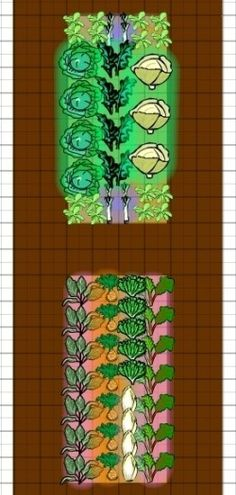 Winter vegetable garden layout