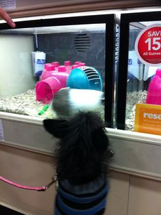 My dog checking out the guinea pigs at PetSmart.
