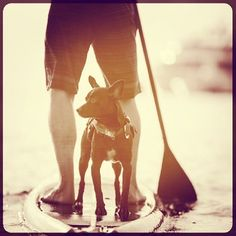 Don't forget the DFD! (doggy flotation device. SUP with your pup!  #sup #paddleboard #standuppaddle